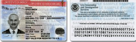 USCIS Update on EAD and Certificate of Citizenship Redesign – Employment Authorization Form Example