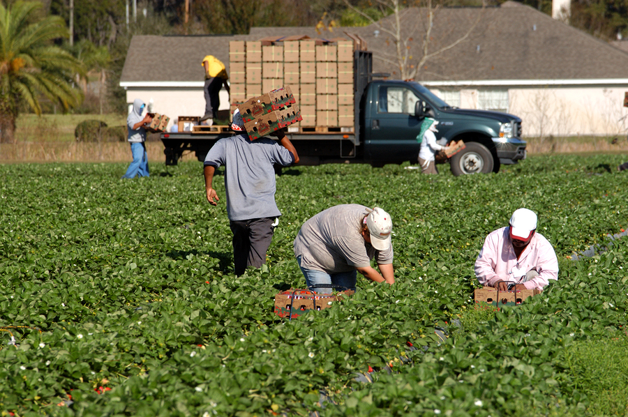 Farming Immigration Reform