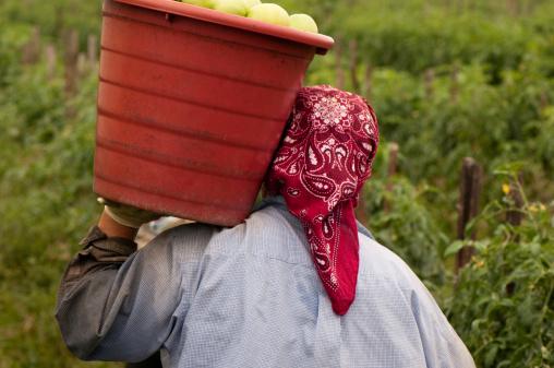 farm visa