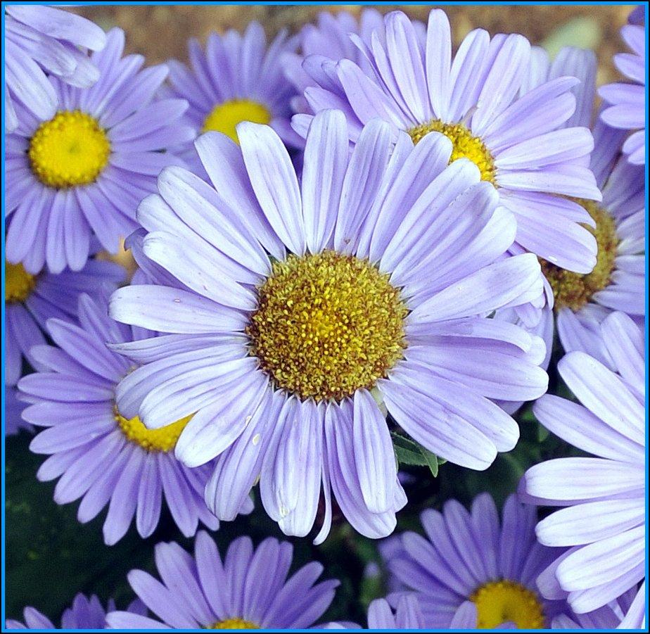 Flower Arrangements by Immigrants